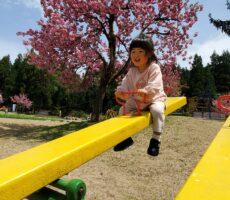 作品No:8 ギッタンバッコン2歳の娘がシーソーに1人で乗れるようになりました。こっちはヒヤヒヤしてましたが娘はとても楽しそうでした。