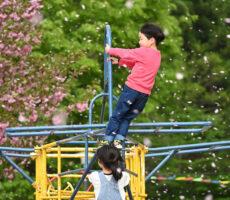 作品No:20 桜吹雪おもいっきり遊んでいる最中に、突然の風!!  目を開けていられませんでした。  風で体が右に流れて、飛行機の舵も変わっちゃったかな?