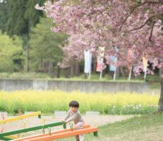 作品No:30 たかーい!きれいに咲く菜の花や八重桜には目もくれず、シーソーへ直行でした。