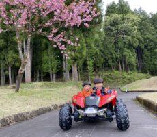 作品No:77 刈り上げ兄弟<br><br>満開の八重桜とゴーカートに乗れてご満悦な兄弟。<br><br>