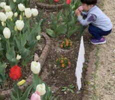 作品No:80 いいにおい<br><br>この公園の花壇が好きな息子。<br /> あちこちにあるお花を必ずチェックしてはお花達を愛でています。<br><br>