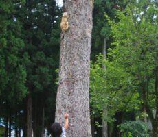 作品No:33 おいでー!<br><br>遊具よりも真っ先に食いついたのが、木に登っている2匹の猫。どうしても一緒に遊びたかったようです♪<br><br>
