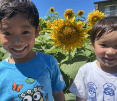 作品No:71 ひまわりと兄弟<br><br>年子の仲良しな兄弟です。<br /> 向日葵と写真撮ろう!と言ったら嬉しそうな顔をして向日葵のところまで走ってきました。<br /> 2人のいい笑顔がポイントです。<br><br>
