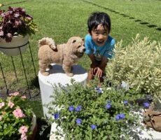 作品No:76 お花いっぱい♡<br><br>お花が大好きな、つばき君。<br /> たくさんのお花を見て喜んでいました。<br><br>