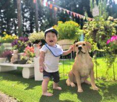 作品No:140 支えてくれてありがとう<br><br>はじめての桂公園。<br /> 美しいガーデンの中で、つかまり立ちをそっと支えてくれる相棒に出会えました。<br /> 最高の笑顔をありがとう♪<br><br>