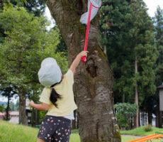 作品No:191 3才の夏休み♫<br><br>虫取り網とカゴを首から下げて、大きな木に留まってる虫に挑んでいきました!<br /> 動かない、せみの抜け殻ゲットです…笑<br><br>