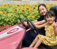 <strong>作品No:88 GOGOゴーカートーーー☆</strong><br><br>綺麗に咲いたひまわりをバックに、ピンクのゴーカートが映えました!大人もこどもも楽しめる桂公園‼︎最高🎵