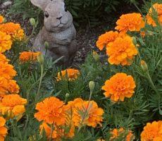 <strong>作品No:66 花壇に迷い込んだウサギ</strong><br><br>