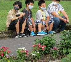 <strong>作品No:69 ラジオ体操前のひととき</strong><br><br>桂公園の部落の小学生は、47年前から夏休みは、ここでラジオ体操を行っています。<br /> 綺麗な環境の中、早朝から眠いけど頑張っています。