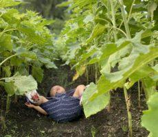 <strong>作品No:15 すってんころりん!</strong><br><br>まだおぼつかない歩きでぼくより背の高いひまわり畑の中をお散歩中にすってんころりん。